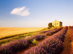 Provence L
