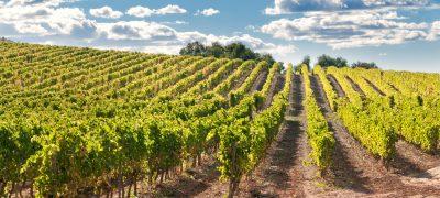 Vineyard and hills, Catalonia, Spain