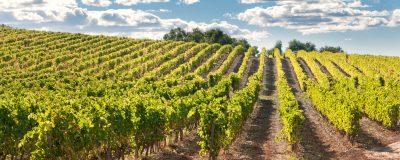 Bordeaux vinice