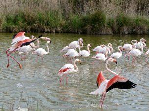 Přírodní rezervace Camargue